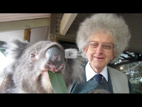 Koala bears and eucalyptus periodic table of videos 879 views urtaz Images