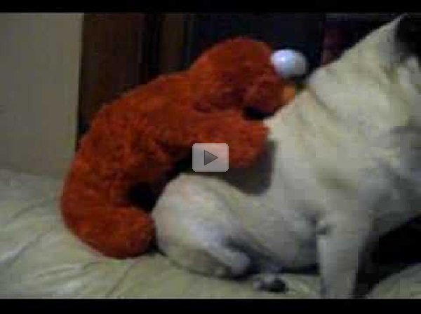 Man Bites Dog No Wait Stuffed Animal Humps Dog