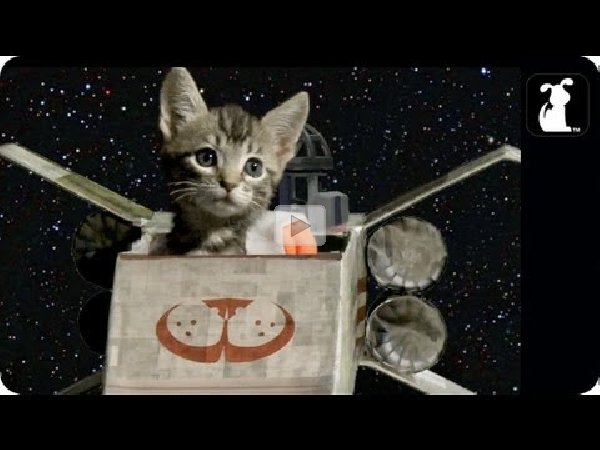 Star Wars  Jedi Academy  Jeffrey Brown                 Amazon com     So here s something that I ve never seen until today  It s a retro      s  video of a Donnie and Marie Osmond Star Wars parody  Did Star Wars fans  enjoy this
